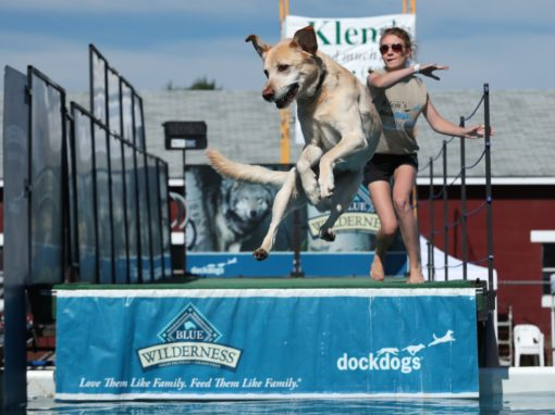 Klem's hosts Dockdog Days in July. The three-day event draws hundreds of dogs and has almost a dozen participating rescues and non-profits.
