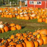 At local pumpkin patches, family memories mean big business